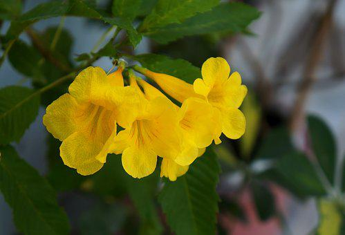 Flower Gold Tone, Yellow Flowers, Yellow, Natural