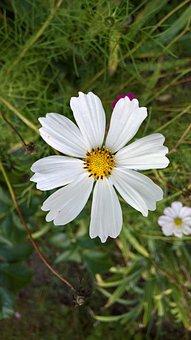 Merchant Louis, Moss, Flower, 2017, Autumn, Light