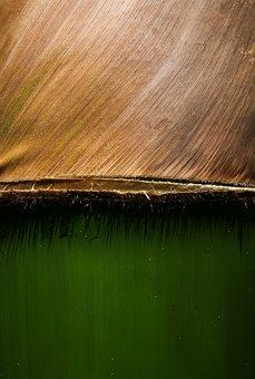 Green, Bamboo, Nature, Tropical, Plant, Hawaii, Travel