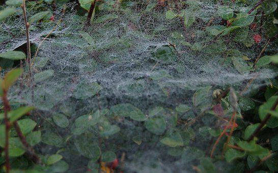 Cobweb, Web, Weave, Structure, Background, Close Up