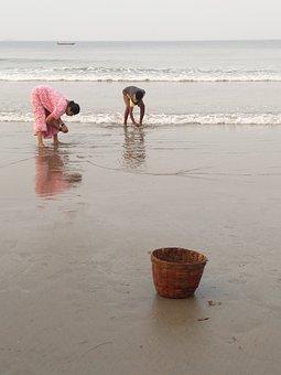 Sea, Shells, Picking, Lunch, Beach, Seashell, Coast