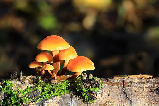 Mushrooms, Forest, Nature, Fall, Wood, Collection