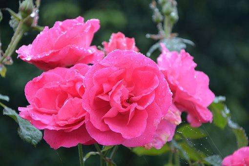 Flower, Pink, Pink Flowers, Color Pink, Pink Flower
