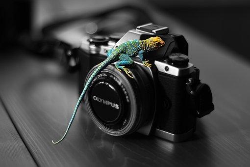 Lizard, Colored Lizard, Nature, Reptile, Natural