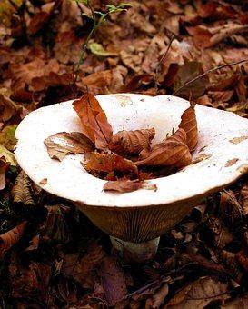 Mushroom, Autumn, Forest, Funnel, Mushroom Picking
