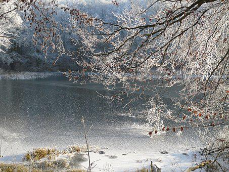 Ripe, Frosted Trees, Frosted Branches, Frozen Lake