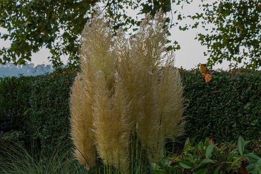 Grass, Autumn, Nature, Grasses, Halme, Reed
