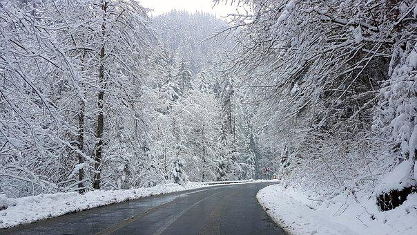 Mountain, Road, Winter, Forest, Snow, Cold, Frost