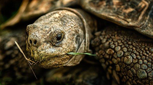 Tortoise, Shell, Nature, Wild