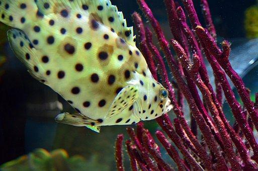 Fish, Underwater, Water, Sea, Ocean, Marine, Animal