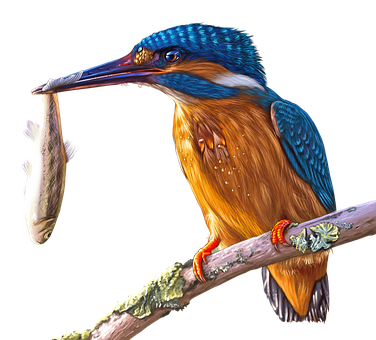 Painting, Kingfisher, Bird, Colorful, Painted, Bill
