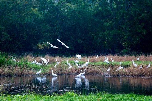Flocks Of White Storks, Puddle Hands Upon Her Waist
