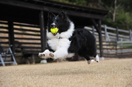 Dog, Fly, Play, Run