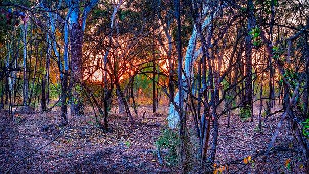 Australian Bush, Sunrise, Dry Bush Land