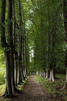 Linde Allé, Lind, The Hald Manor House, Forest, Natural