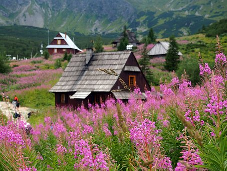 Tatry, Hala Gąsienicowa, The National Park, Nature
