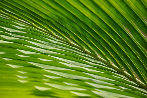 Leaves, Palm, Trees, Frond, Waving