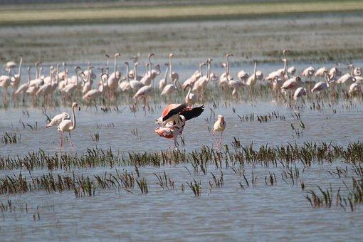 Flamingo, Spain, Nature, Bird, Wildlife, Fauna, Lake