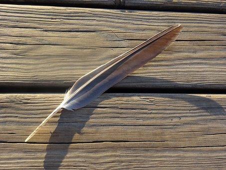 Pen, Wood, Forest