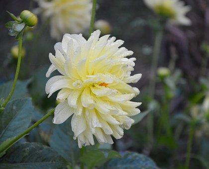 Yellow Flowers White, Profile Flower