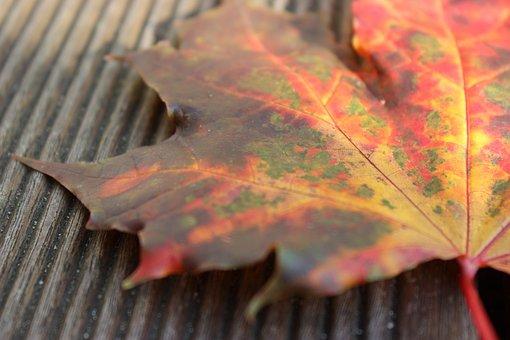 Autumn, Autumn Beginning, Leaf, Close Up, Fall Color
