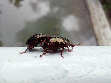 Insect, Beetle, Black Beetle, Arthropod