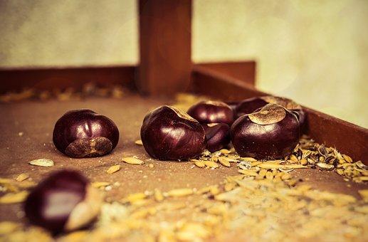 Autumn Beginning, Chestnut, Brown, Open Chestnut