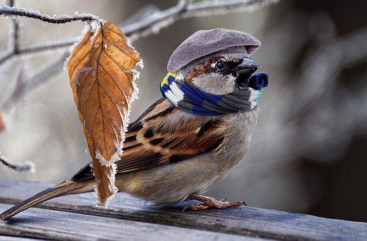 Sparrow, Frost, Feather, Plumage, Cold, Sweet, Mood