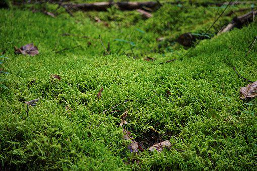Moss, Forest Floor, Close, Forest, Nature, Green, Glade