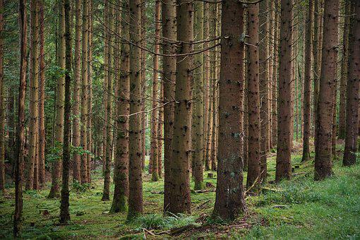 Forest, Trees, Branches, Forests, Wood, Nature