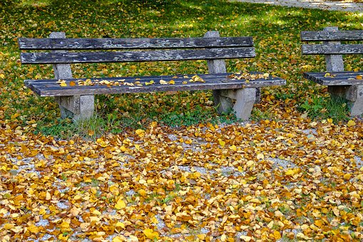 Autumn, Bank, Leaves, Rest, Resting Place, Nature