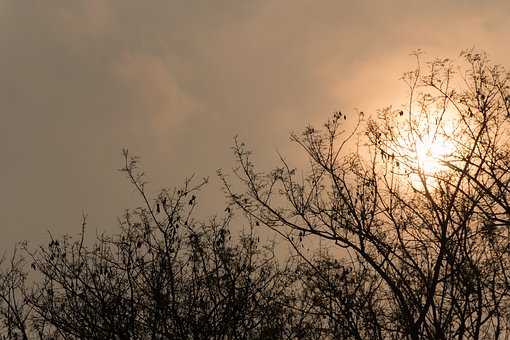 Sol, Shadows, Eventide, By Sunsets, Nature, Tree, Twigs