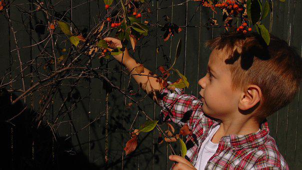 Little Boy, Child, Curious, Explore, Outside, Nature