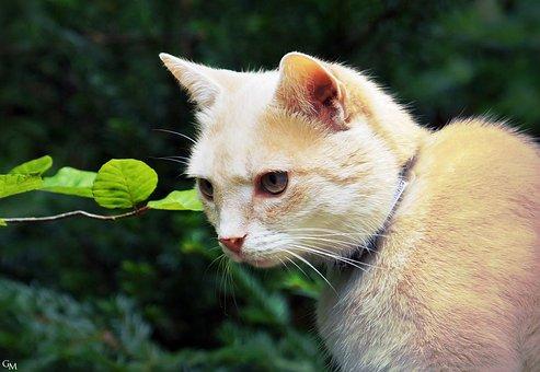 Cat, Furry, Red Tomcat, Mieze, Pet, Hangover Watched