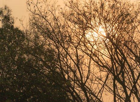 Sol, Hot, Dry Twigs, Shadows, Twigs, Shrubs, Sunset