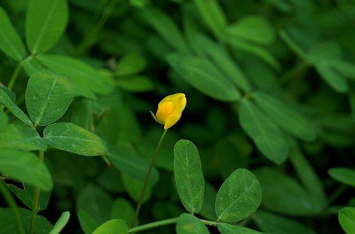 Flower, Solitary, Yellow