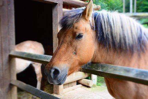 Horse, Wild Horse, Zoo, Nature, Animal, Portrait, Fur