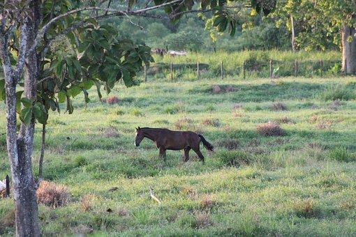 Horse, Prairie, Prado, Green, Animals, Wild, The Field