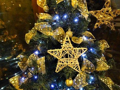 Christmas, Sapling, Christmas Tree, Christmas Time
