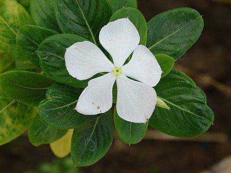 Beautiful, Flowers, Soft, Single, Daisy, Circle, Nature