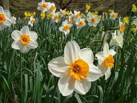 Daisy, Chatsworth House, England, Flora, Spring