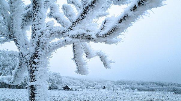 Wintry, Hoarfrost, Frost, Winter Forest, Aesthetic, Fog