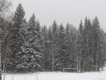 March, The Beginning Of Spring, The Snow Falls, Forest