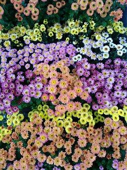 Flowers, Beautiful, Pixar Bay, 4 Colors