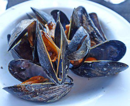 Mussels, Steamed, Seafood, Delicacy, Food, Dining