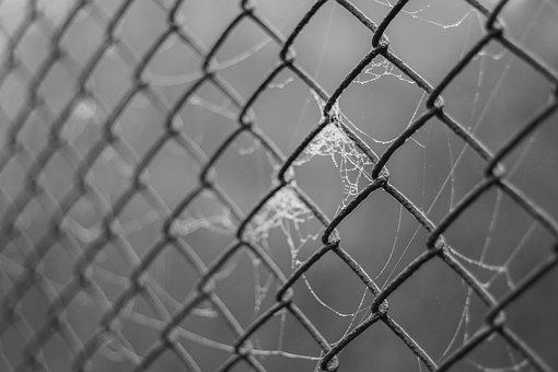 The Grid, Fencing, Wire, Cobweb, Spider's Web, Haze