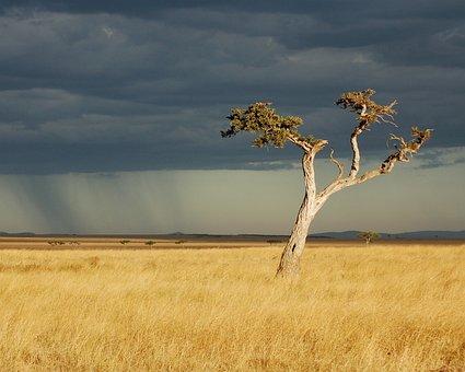 Savanna, Africa, Kenya, Storm, Rain, Landscape, Travel
