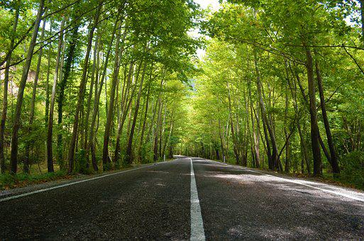 Road, Forest, Landscape, Nature, Season, Tree, Sunlight