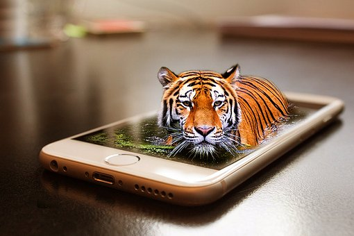 Tiger, Wildlife, Zoo, Cat, Animal, World, Iphone