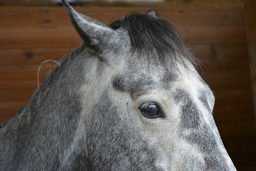 Horse, Horse Eye, œil, Look, Equine, Animal, Horse Head